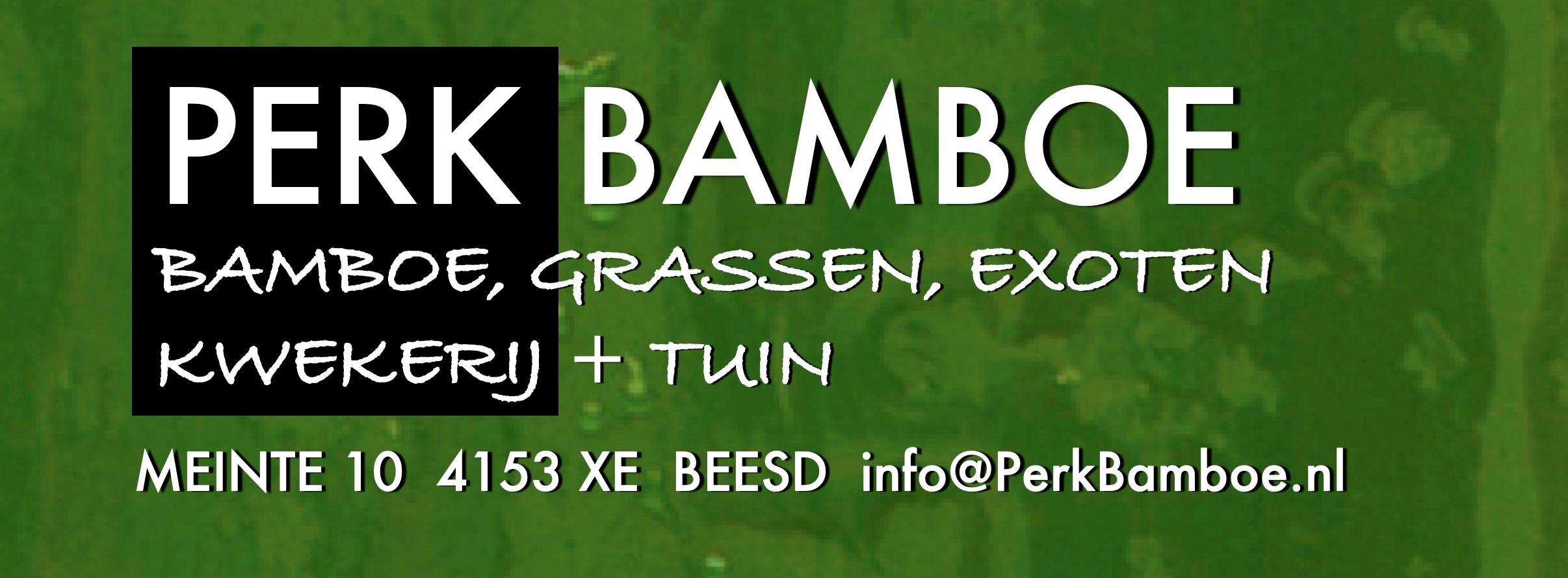 Perk Bamboo